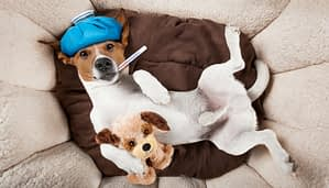 Hundekrankenversicherung